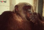 macaco-tiao